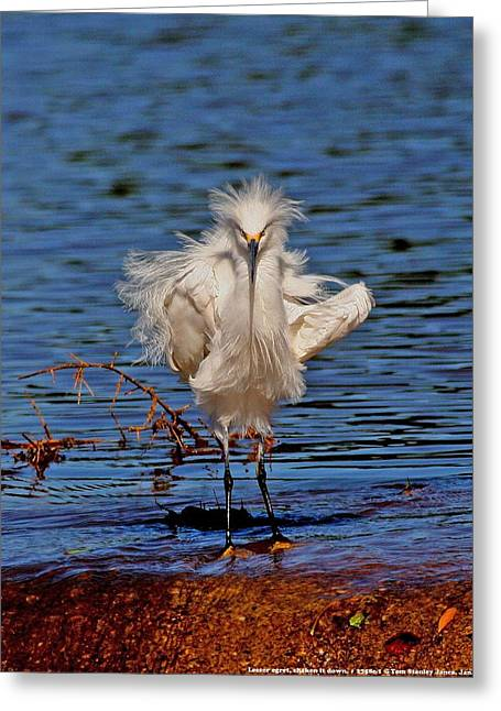 Greeting Card featuring the photograph Snowy Egret With Yellow Feet by Tom Janca