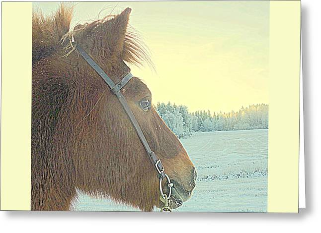 Icelandic Horse Admiring The Snowy Fields  Greeting Card by Hilde Widerberg