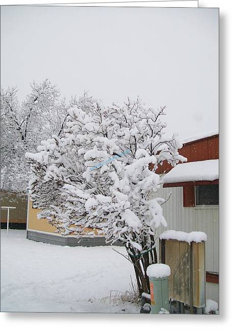 Greeting Card featuring the photograph Snowy Lilac by Jewel Hengen