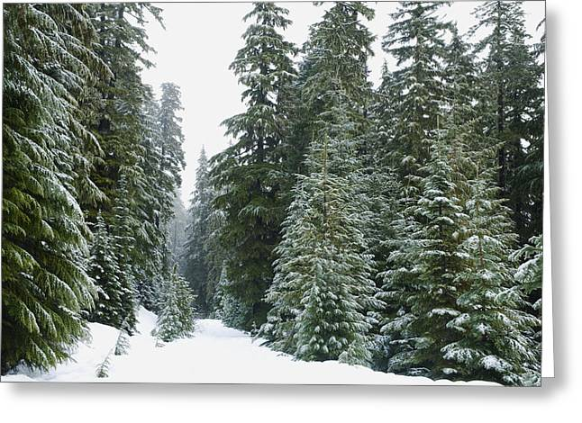 Snowy Mount Hood Forest Greeting Card by Charmian Vistaunet