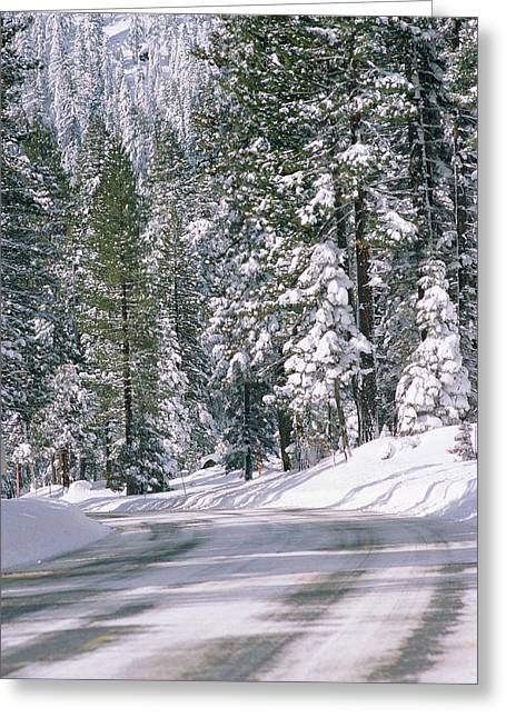 Snowy Mountain Road With Tall Trees Greeting Card