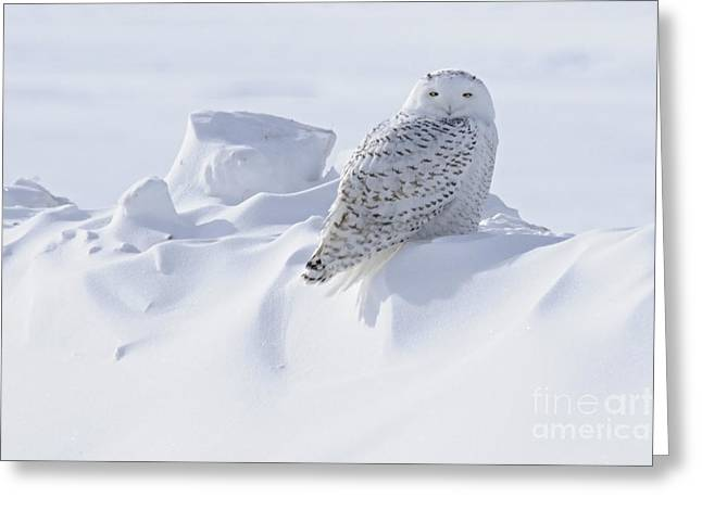 Snowy On A Snowbank Greeting Card