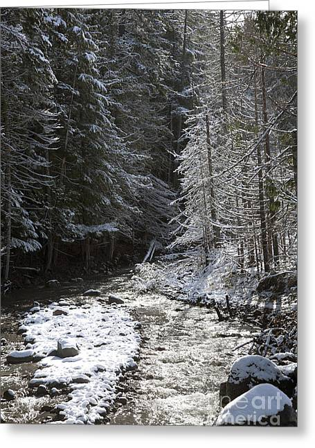 Snowy Oregon Stream Greeting Card by Peter French