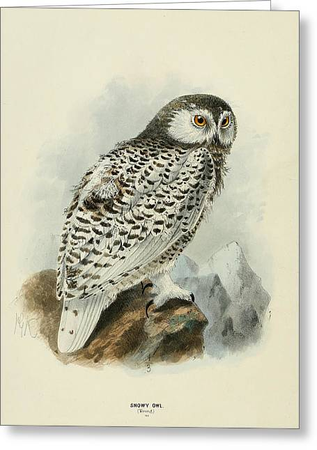 Snowy Owl 1 Greeting Card by Dreyer Wildlife Print Collections