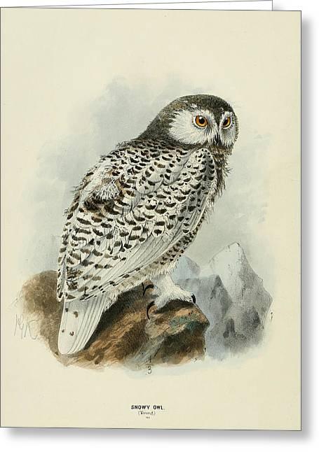 Snowy Owl 1 Greeting Card by Rob Dreyer