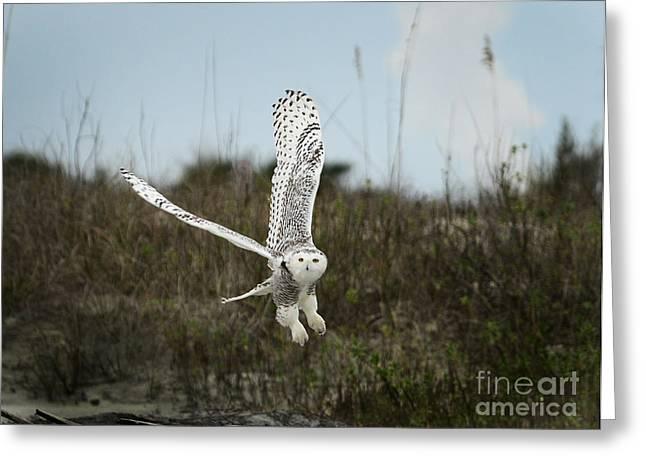 Snowy Owl 42 Greeting Card by Cindy McIntyre