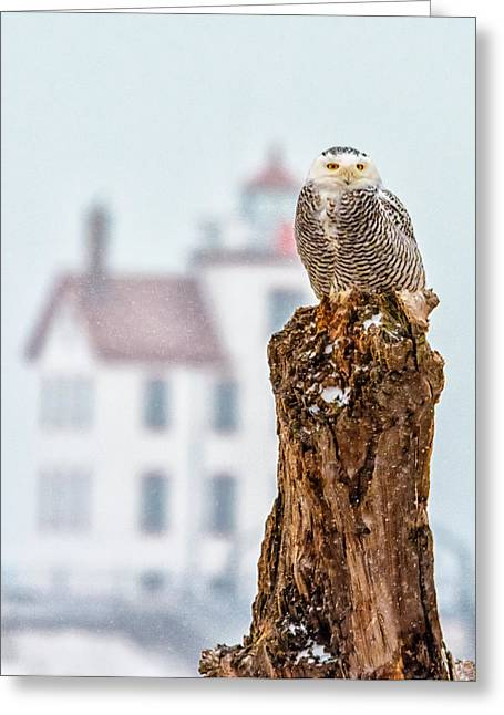 Snowy Owl At The Lighthouse Greeting Card