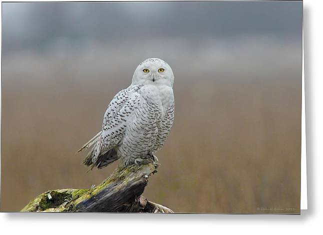 Snowy Owl  Greeting Card by Daniel Behm