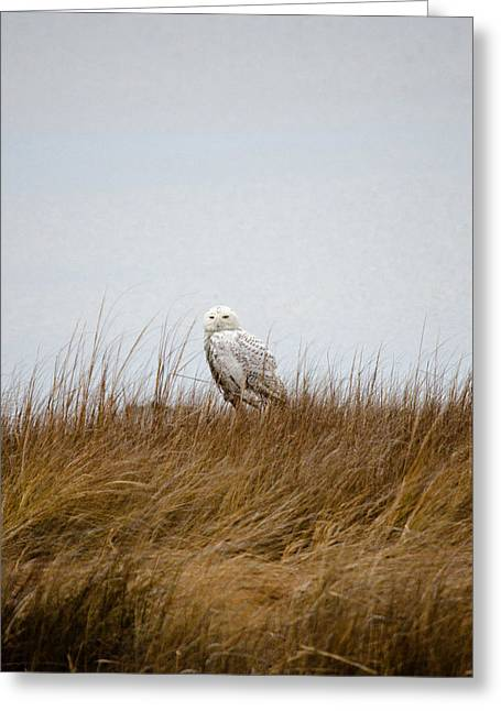 Snowy Owl Greeting Card by Gary Wightman