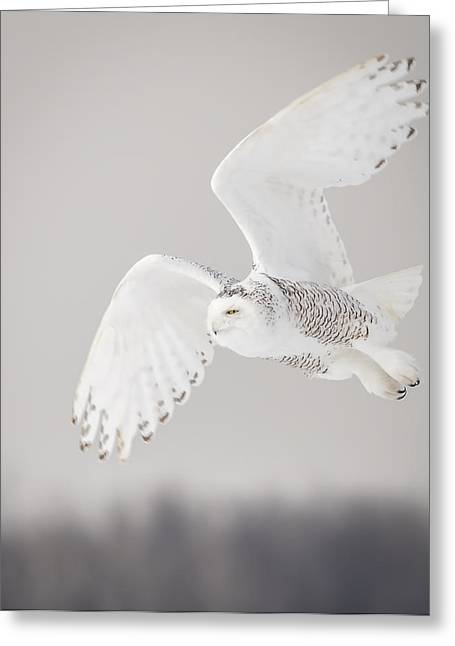Snowy Owl In Flight 4 Greeting Card