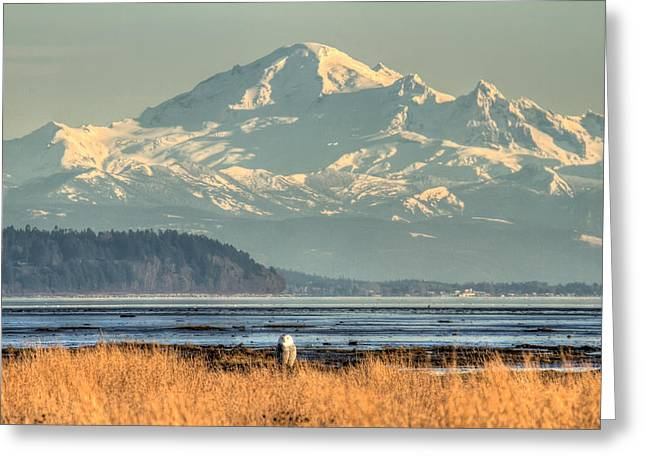 Snowy Owl In Front Of Mount Baker Greeting Card by Pierre Leclerc Photography