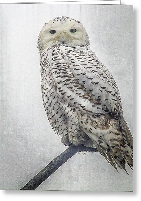 Greeting Card featuring the photograph Snowy Owl In The Rain by Constantine Gregory
