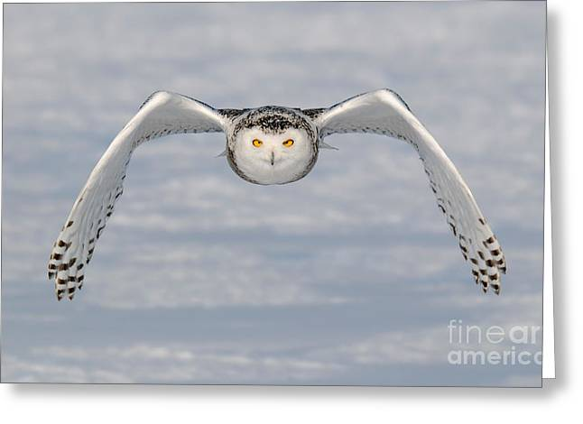 Snowy Owl Incoming Greeting Card by Scott Linstead