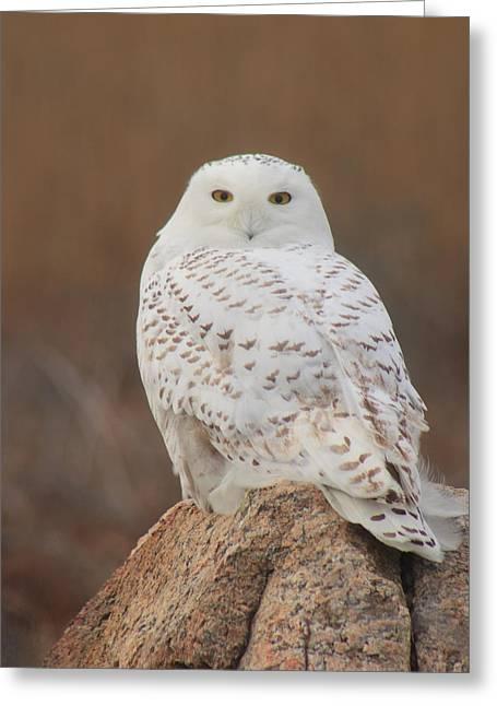 Snowy Owl Greeting Card by John Burk