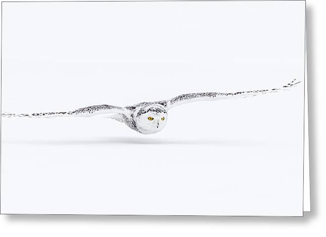Snowy Owl Greeting Card by Kim Abel