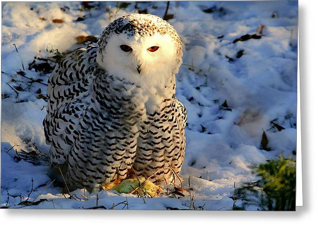 Greeting Card featuring the photograph Snowy Owl by Larry Trupp