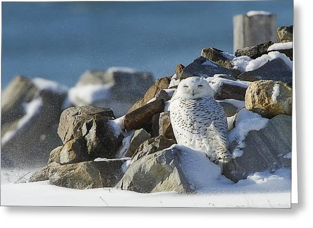 Snowy Owl On A Rock Pile Greeting Card