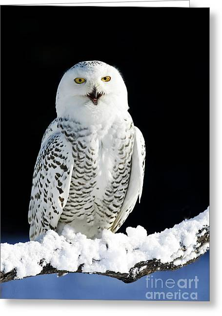 Snowy Owl On A Twilight Winter Night Greeting Card