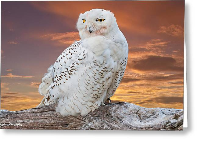 Snowy Owl Perched At Sunset Greeting Card