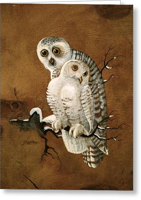 Snowy Owls Greeting Card