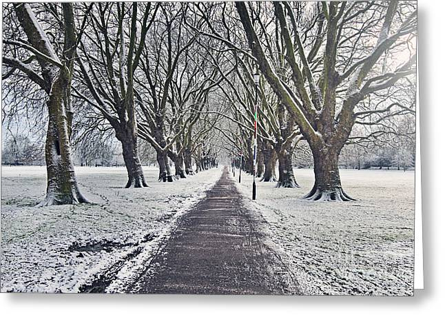 Snowy Path Through Jesus Green In Cambridge Uk Greeting Card by Justin Paget