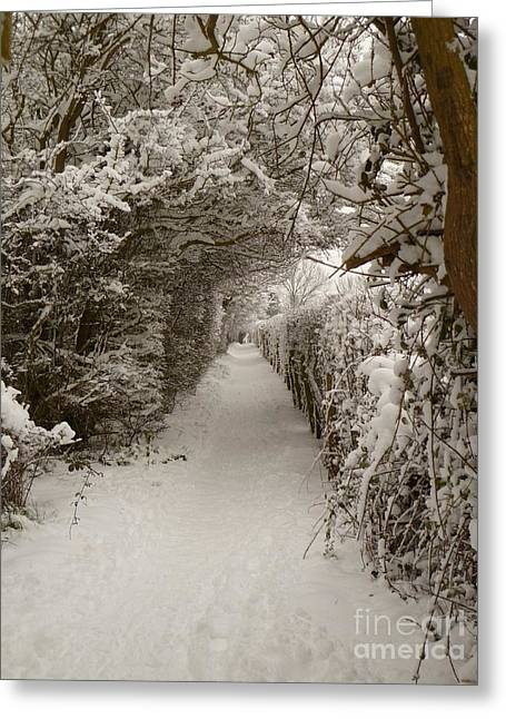 Greeting Card featuring the photograph Snowy Path by Vicki Spindler