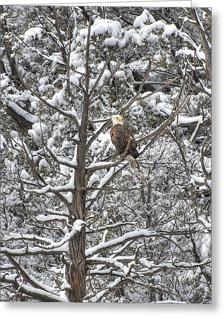 Greeting Card featuring the photograph Snowy Perch Bald Eagle by Britt Runyon