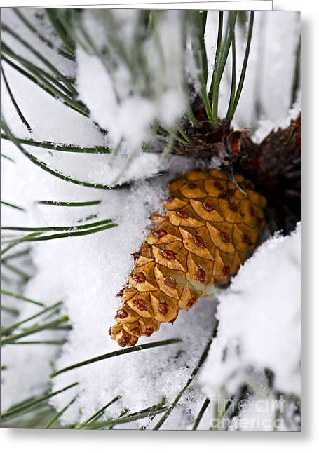 Snowy Pine Cone Greeting Card by Elena Elisseeva