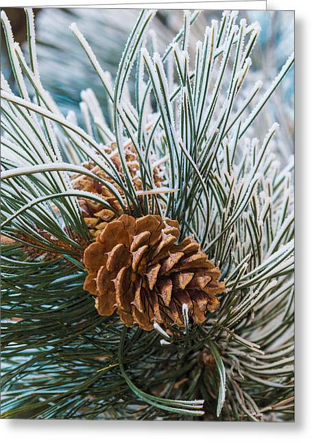 Snowy Pine Cones Greeting Card