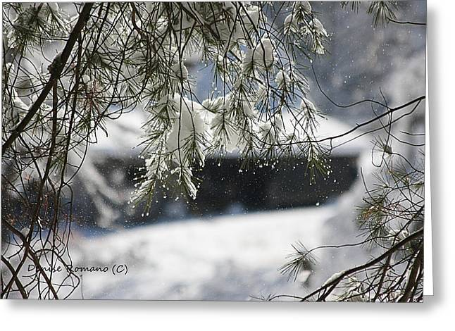 Snowy Pine Greeting Card by Denise Romano