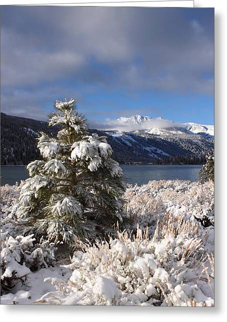 Snowy Pine  Greeting Card by Duncan Selby
