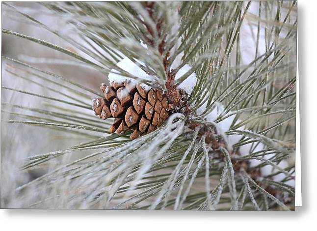 Snowy Pine Greeting Card by Penny Meyers