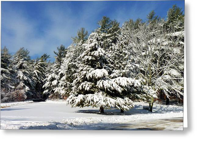 Greeting Card featuring the photograph Snowy Pines by Janice Drew
