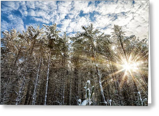 Snowy Pines With Sunflair Greeting Card by Brian Boudreau