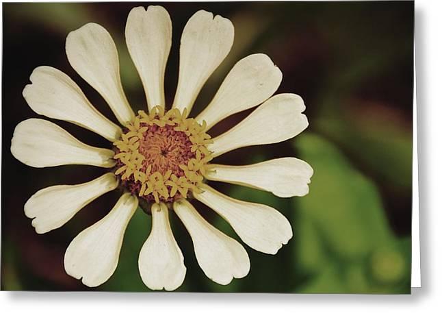 Snowy Pinwheel Greeting Card by JAMART Photography