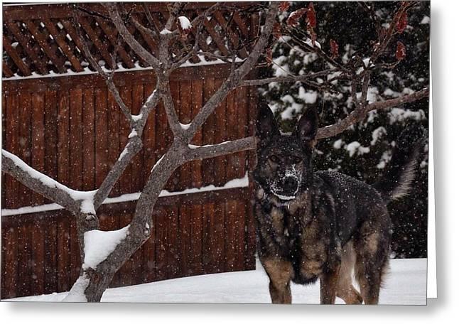 Snowy Shepherd Greeting Card