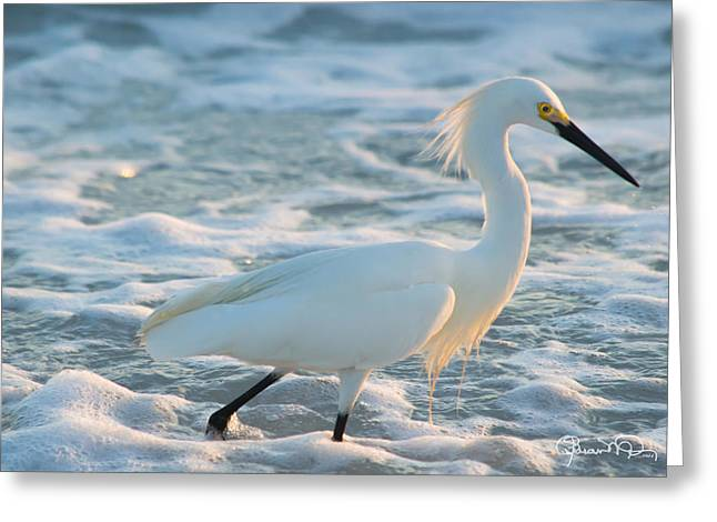 Snowy Siesta Key Sunset Greeting Card