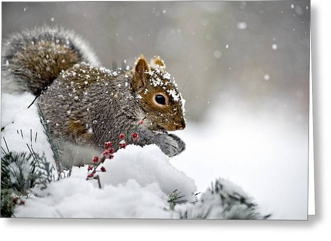 Snowy Squirrel Greeting Card by Christina Rollo