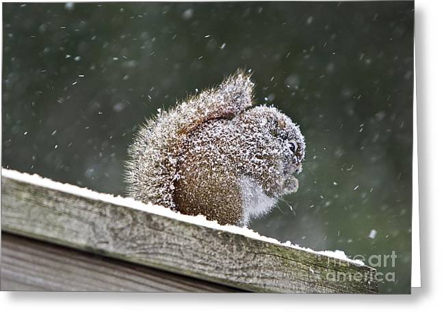 Snowy Squirrel Greeting Card by Karin Pinkham