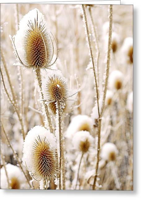 Snowy Thistle Greeting Card by The Forests Edge Photography - Diane Sandoval