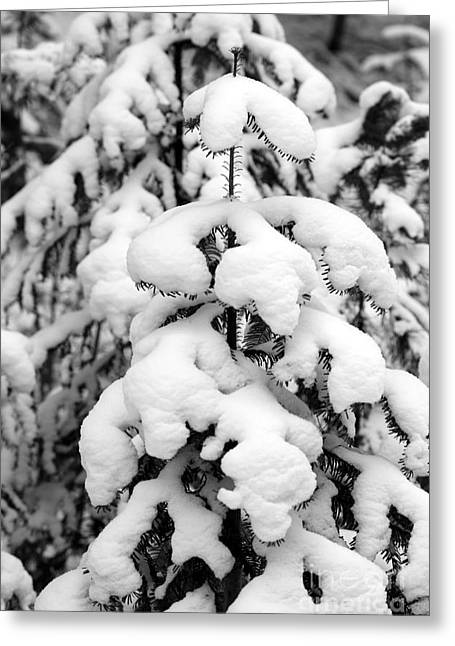 Snowy Tree - Black And White Greeting Card by Carol Groenen