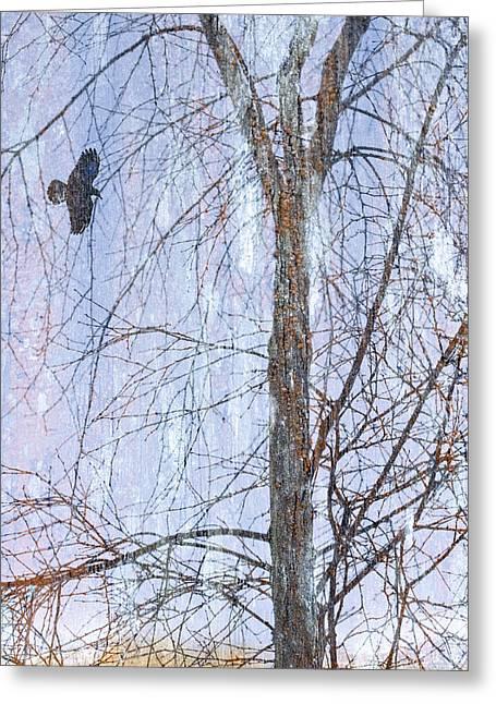 Snowy Tree Greeting Card by Carol Leigh
