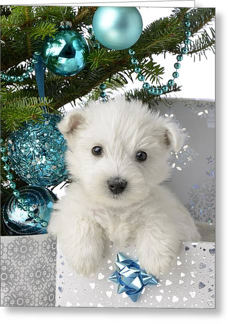 Snowy White Puppy Present Greeting Card by Greg Cuddiford