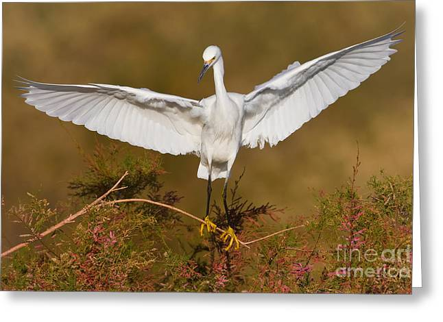 Greeting Card featuring the photograph Snowy Wingspread by Bryan Keil