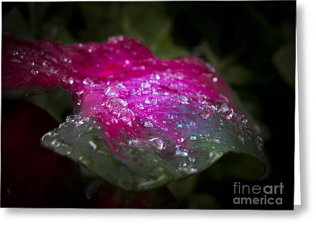 So It Rained Greeting Card