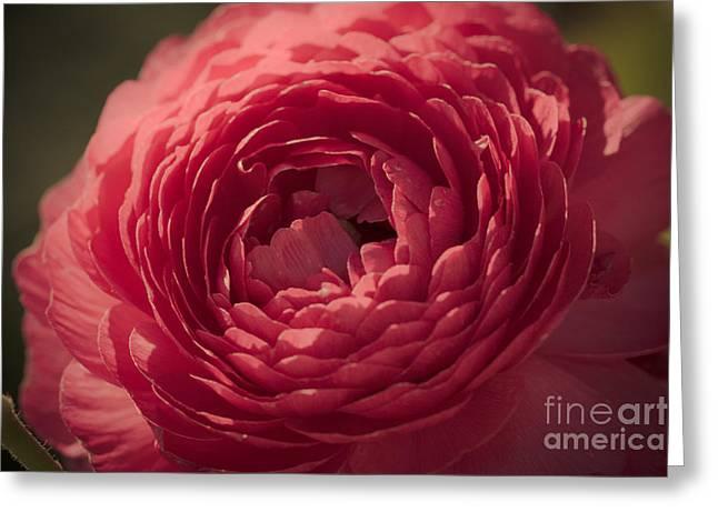 So Pink Greeting Card by Ana V Ramirez