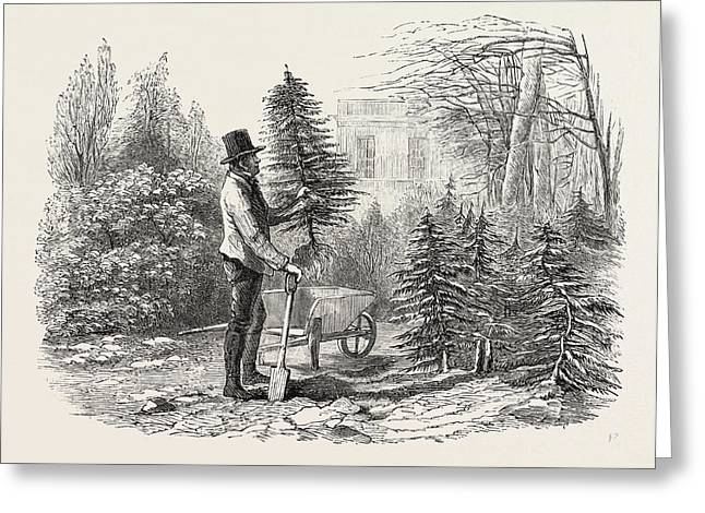 So The Little Fir-tree Went Off In Its Wheelbarrow Greeting Card by English School