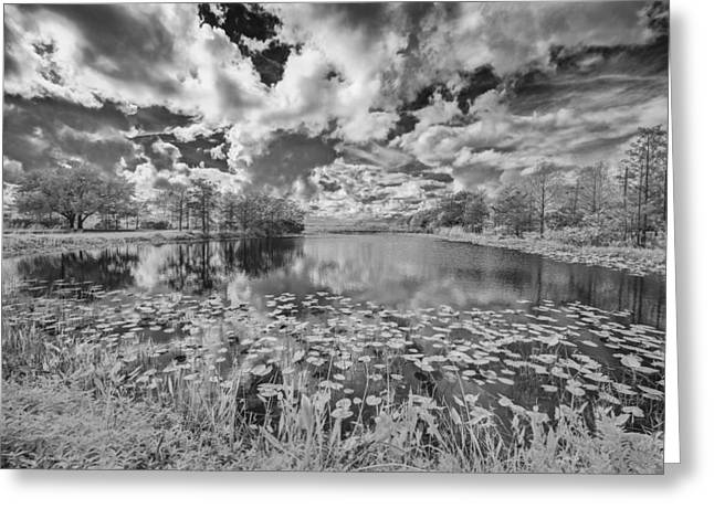 So You See It Greeting Card by Jon Glaser