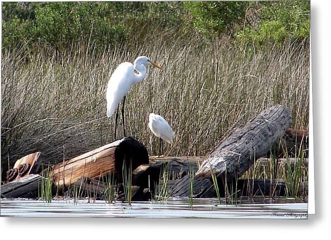 Soaking Up The Rays Greeting Card by Debra Forand