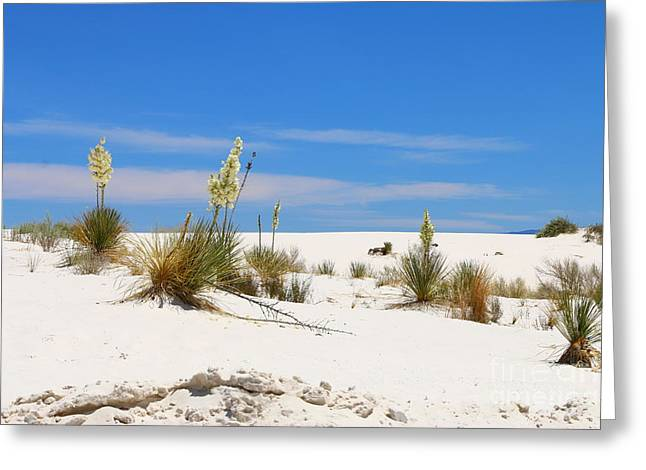 Soap Yucca At White Sand Greeting Card by Christiane Schulze Art And Photography